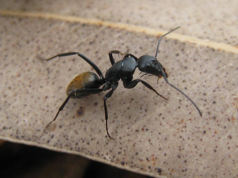 Faire Fuir Les Fourmis le traitement efficace contre les fourmis (produit, piège